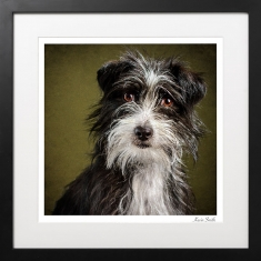 Studio-dog-portrait-rescue-dog
