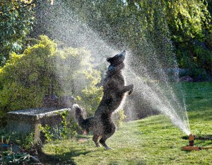 Dogs in hot weather, keeping your pet safe in the heat
