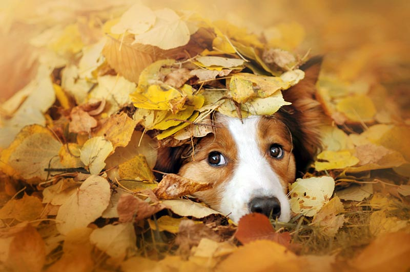 Dog hiding under leaves