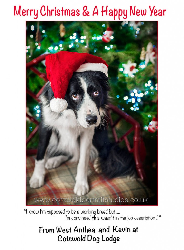 recent posts merry christmas dog boarding